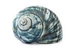 snail sketch.jpg