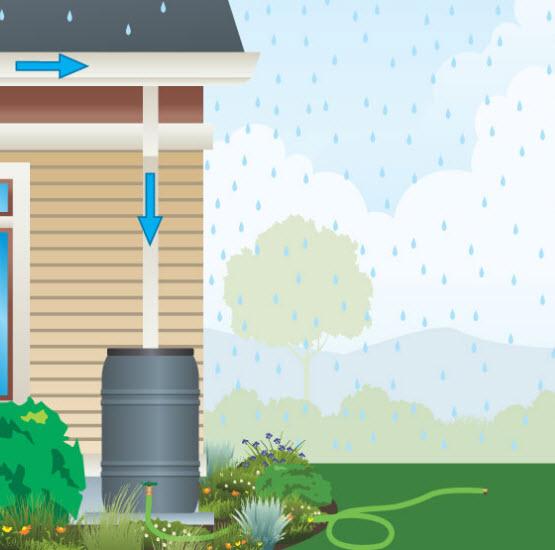 rain barrel.jpg