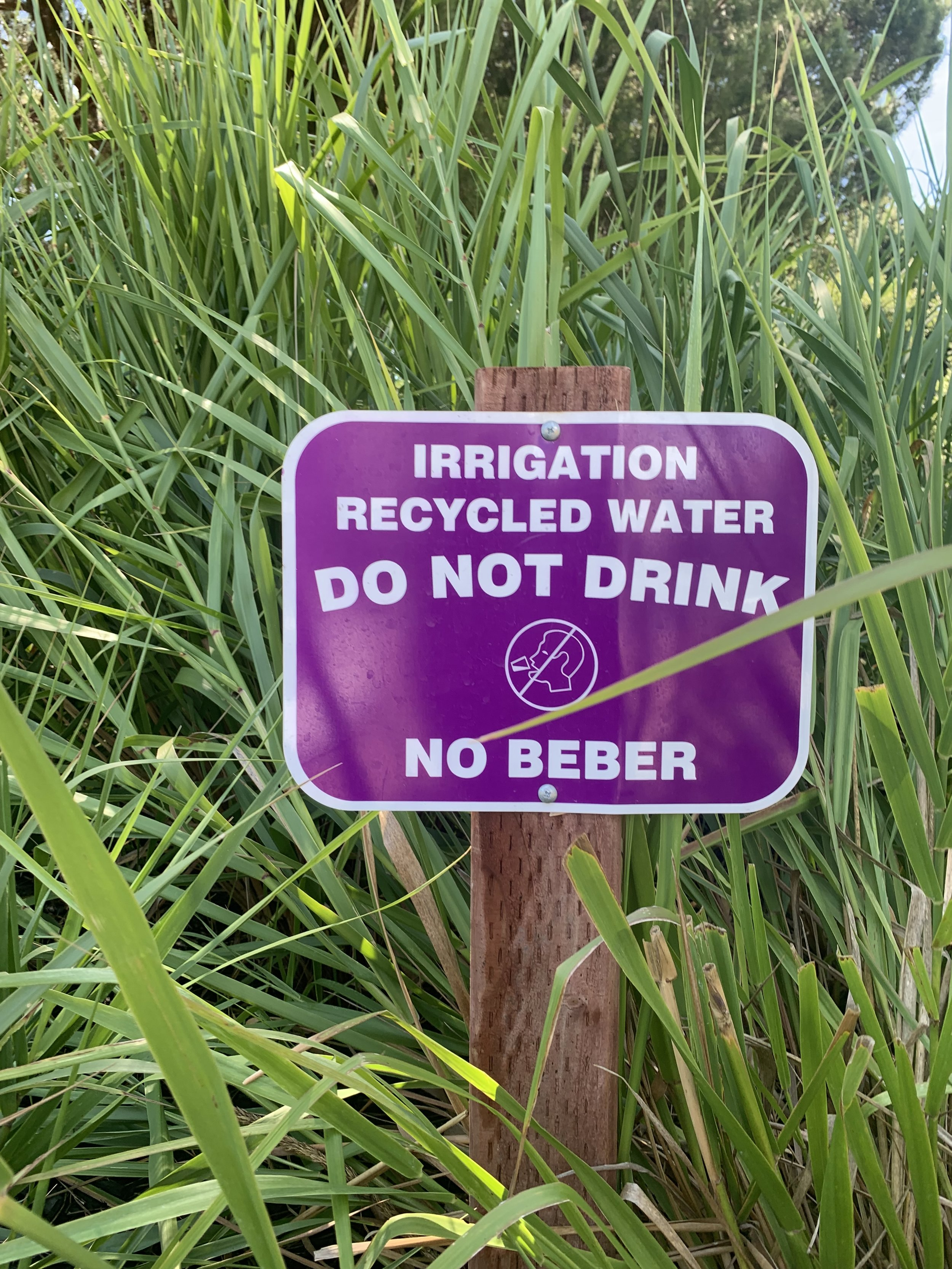 Recycled Water 1.JPG