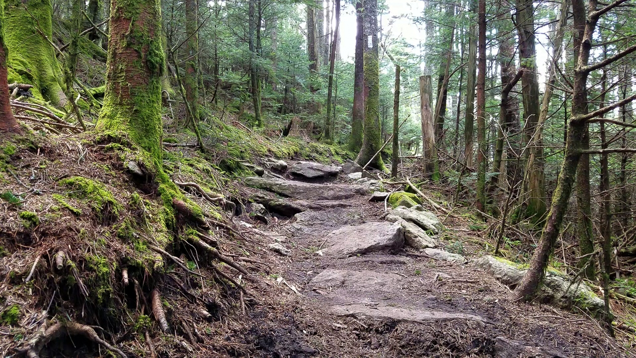 roan highland section of the Appalachian Trail