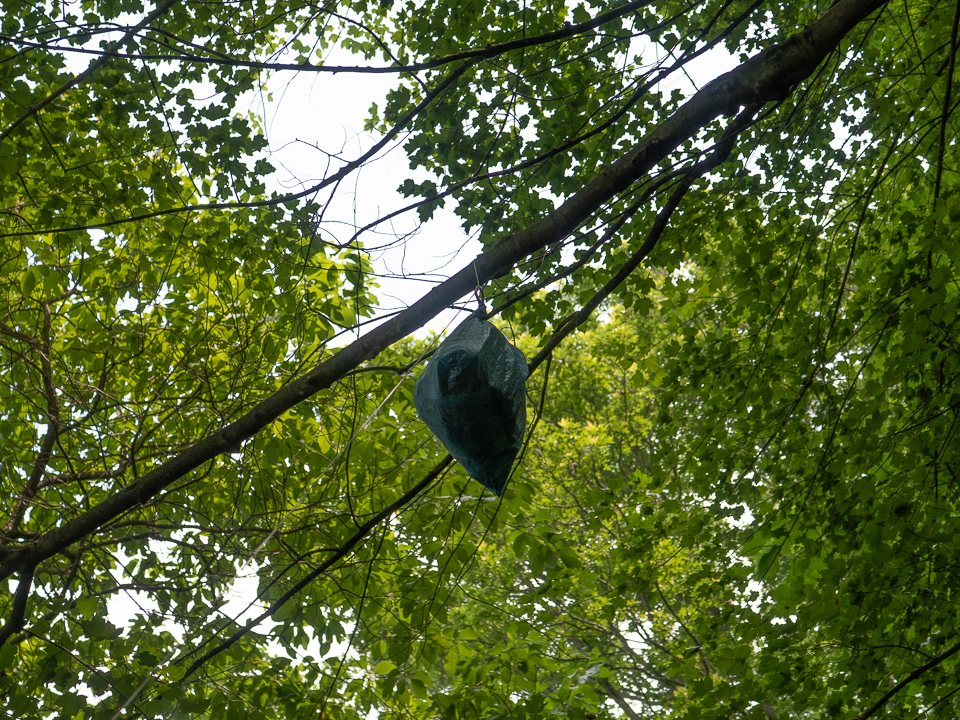 bear bag at branch (1 of 1).jpg