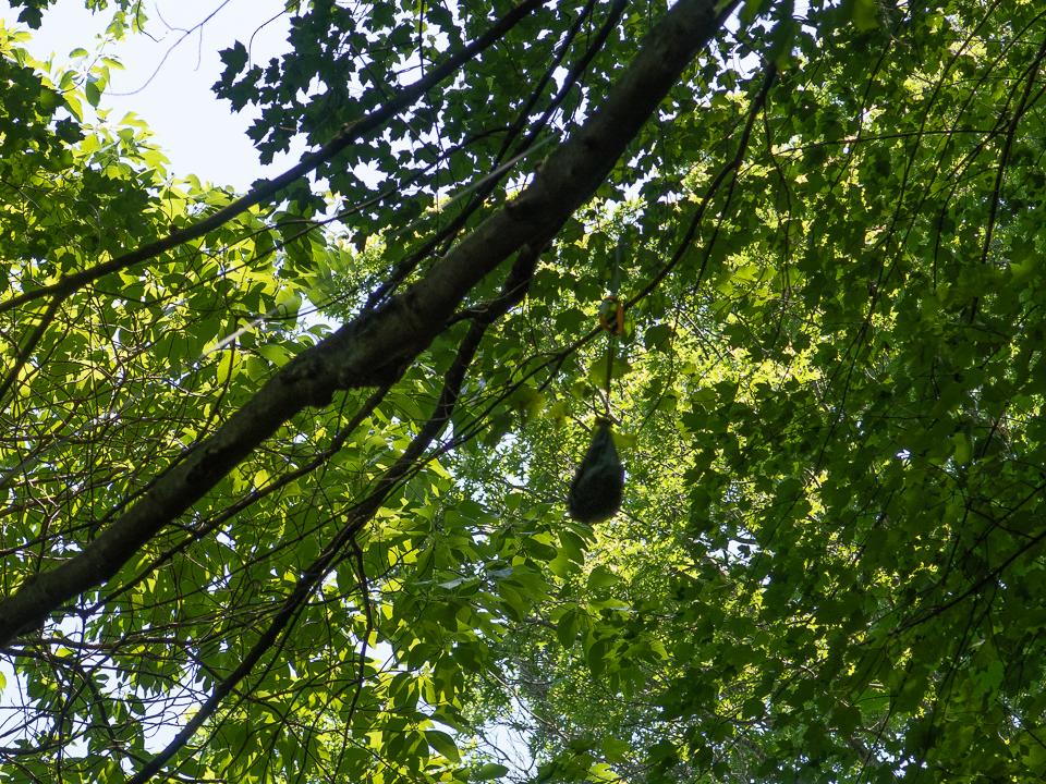 bear bag over branch (1 of 1).jpg