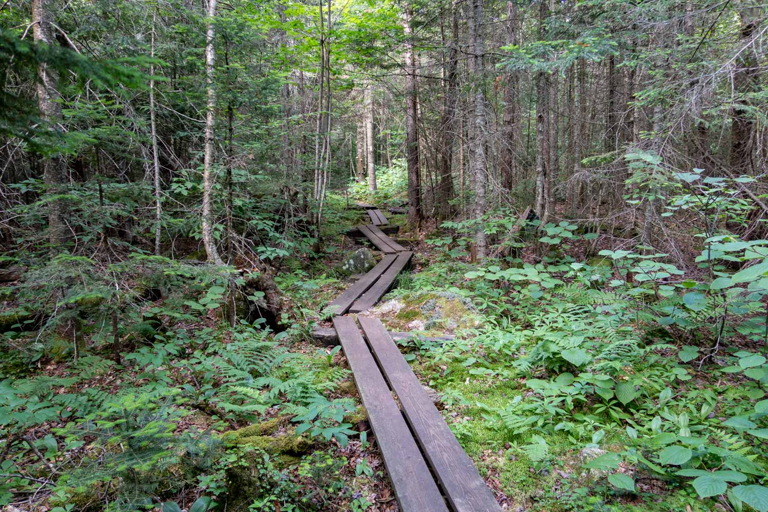Long Trail Boardwalk