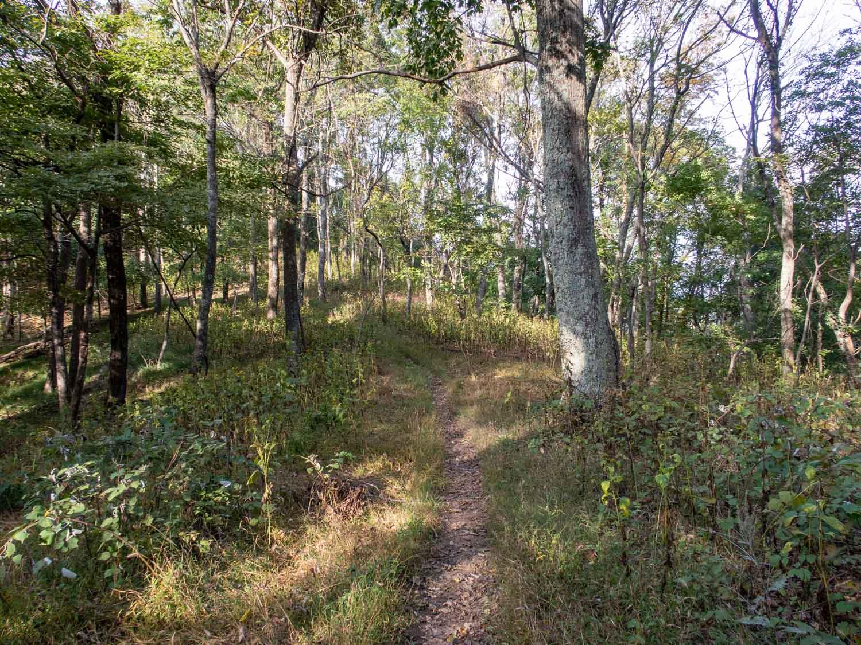 vtc trail.jpg