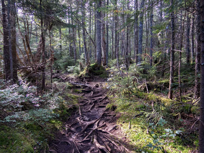 adirondacks woods.jpg