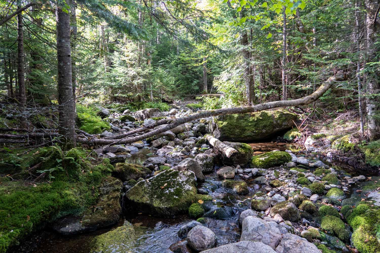 adirondack creek.jpg