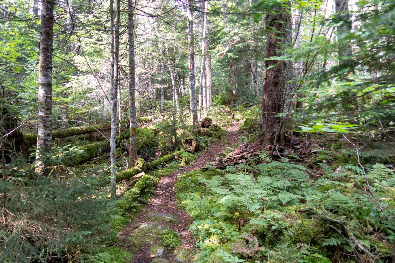 adirondack forest.jpg