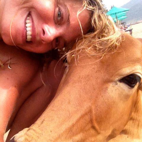 cows yoga.jpg