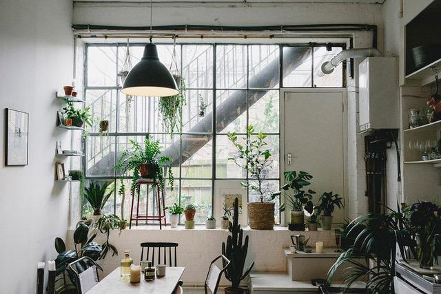 Ro-Co-House-of-Plants-1-1000x667.jpeg