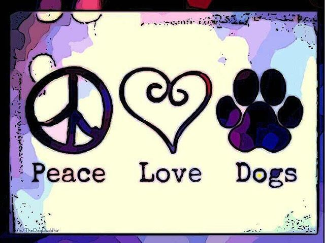 Only these things really matter! 🙏🏻💜🐶🐶