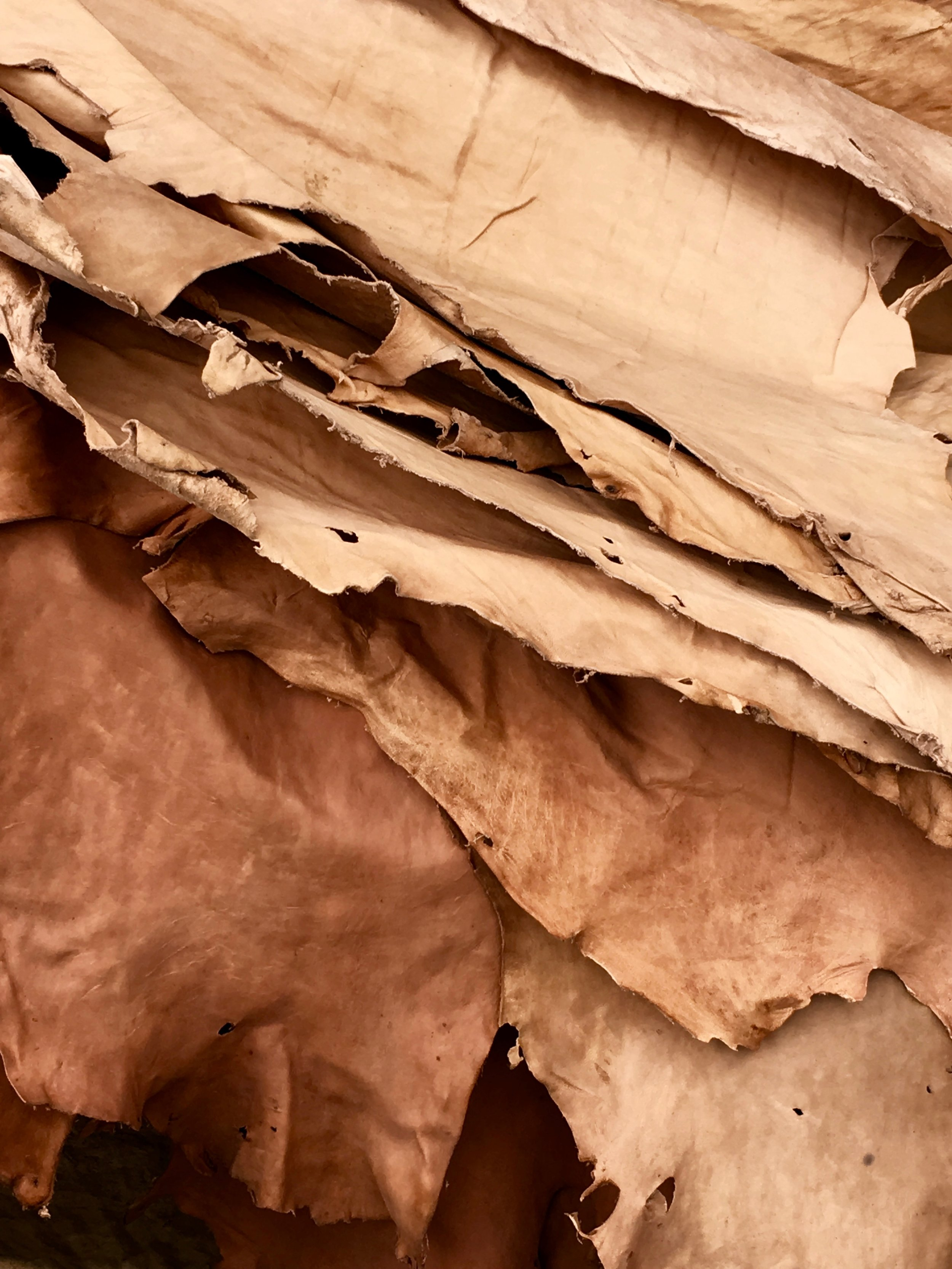Cowhide being tanned to make Sarep + Rose bags.  (Originally published on sareptharose.com)