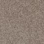 carpet-timeless-tan-floor-godfrey_hirst.jpg