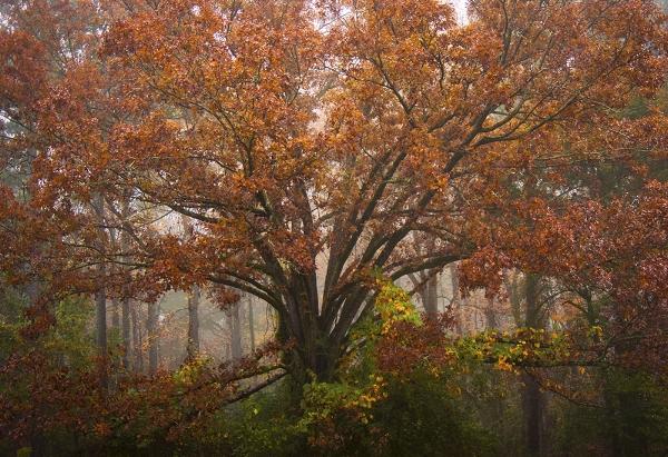 Tree of Life Private Homestead, Dacula, GA November, 2017