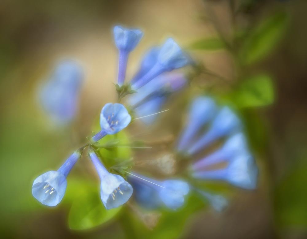 Wildflower Blue.jpg