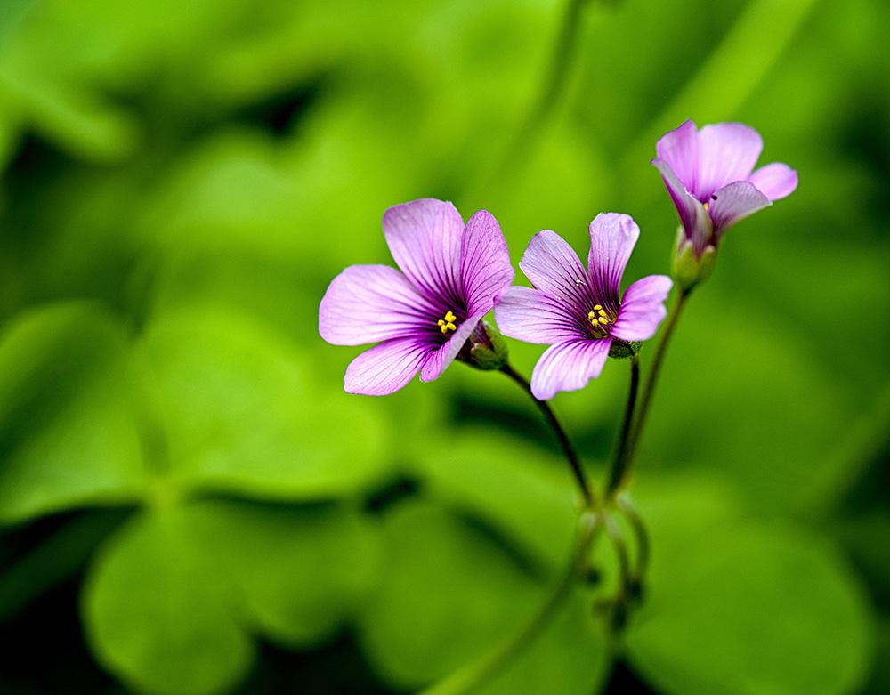 Wildflower Purple.jpg