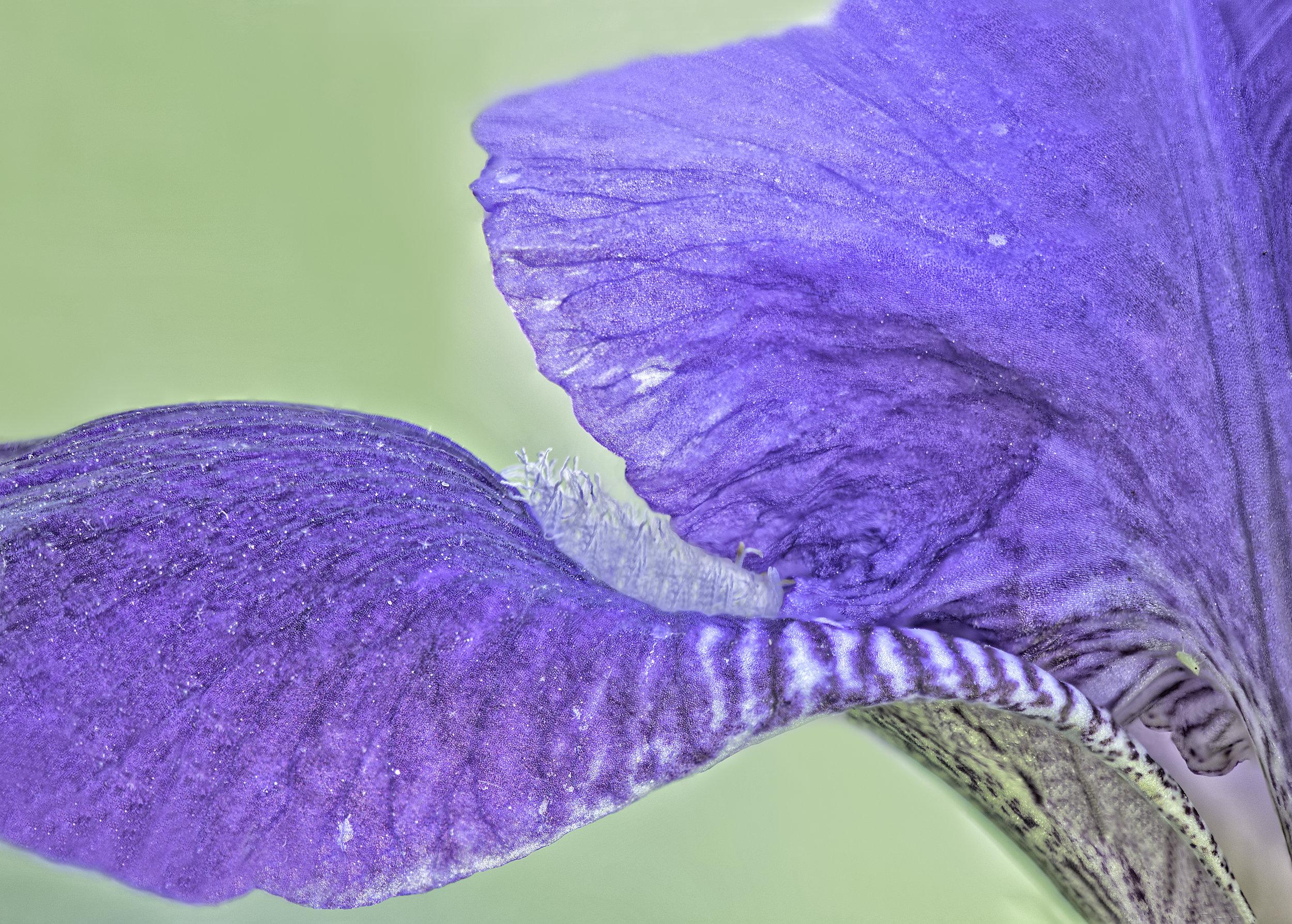 Lensbaby Velvet 85, f1.8 10-image soft-focus focus stack