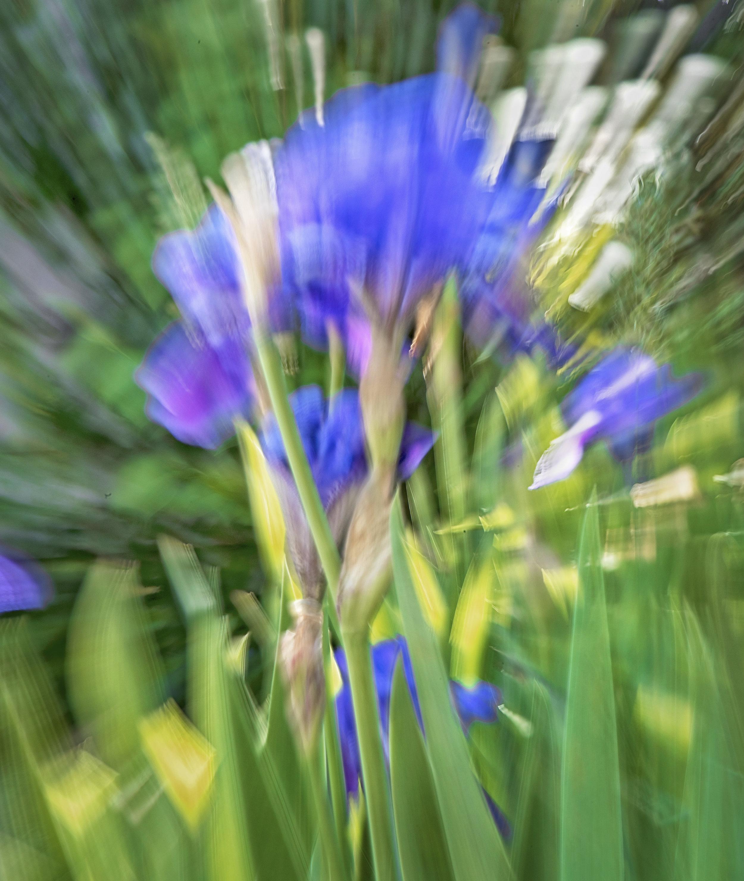 Iris Abstract Nikon 24-120 f4 ISO 63, f36, 1 second