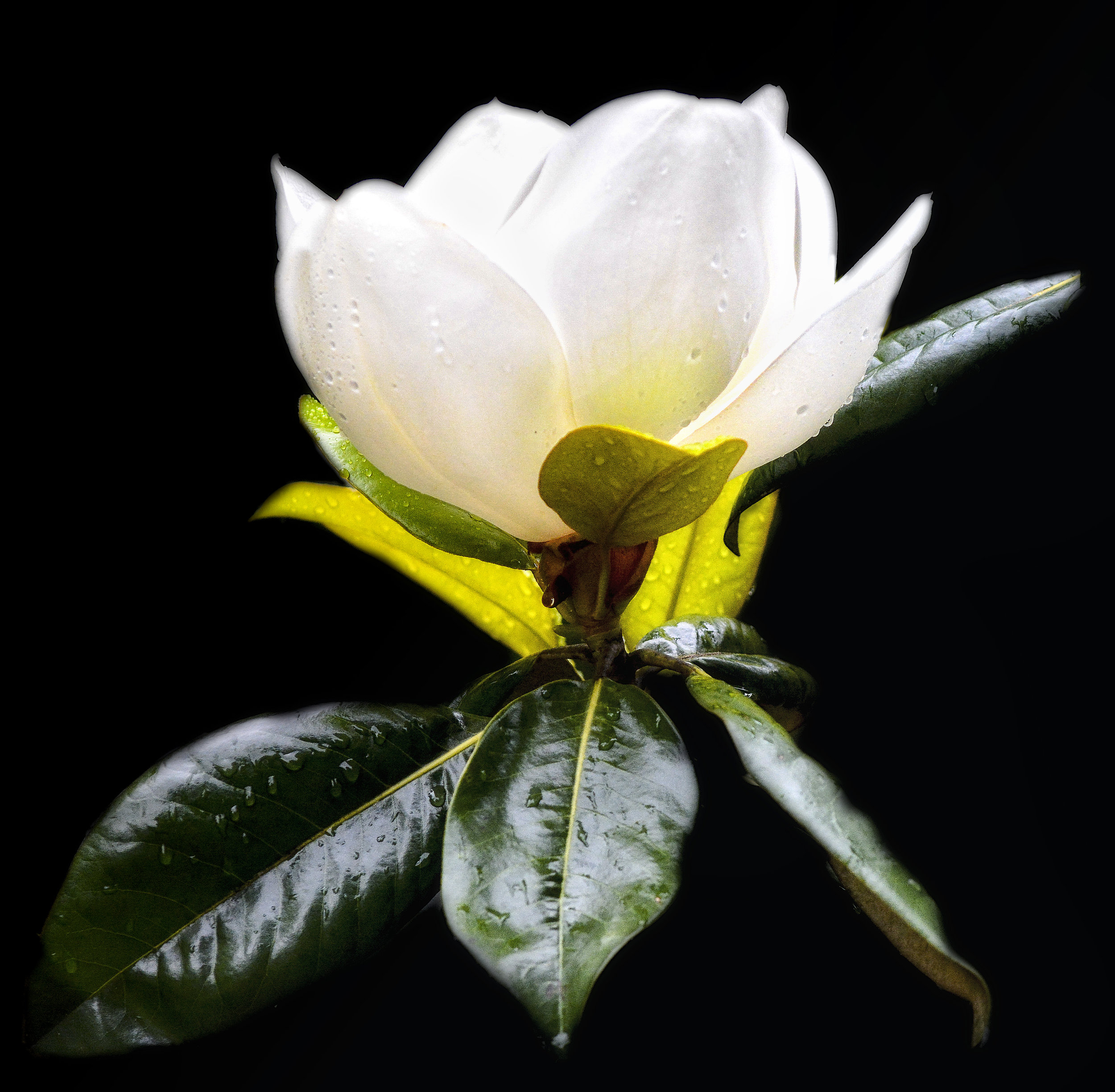 2017-05-31 001 095 - Copy FLOWER ONLY JPG 1.jpg