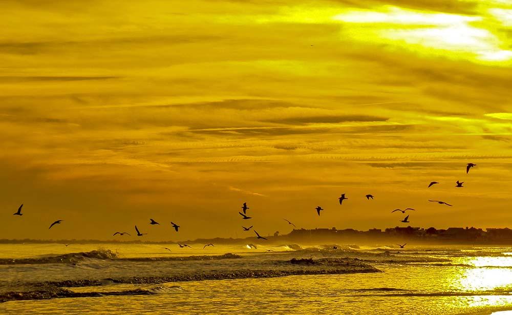 Freedom 3 Isle of Palms January, 2015