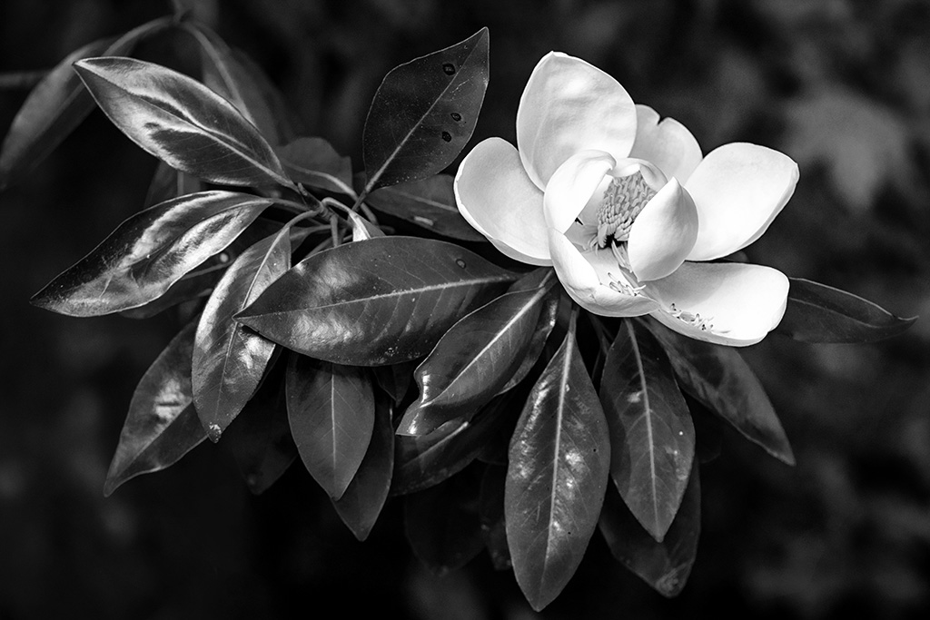 Primo Flore  Southeastern Photography Society exhibit, Visions in Black and White Callanwolde Center for Fine Arts September 26 - November 17, 2019