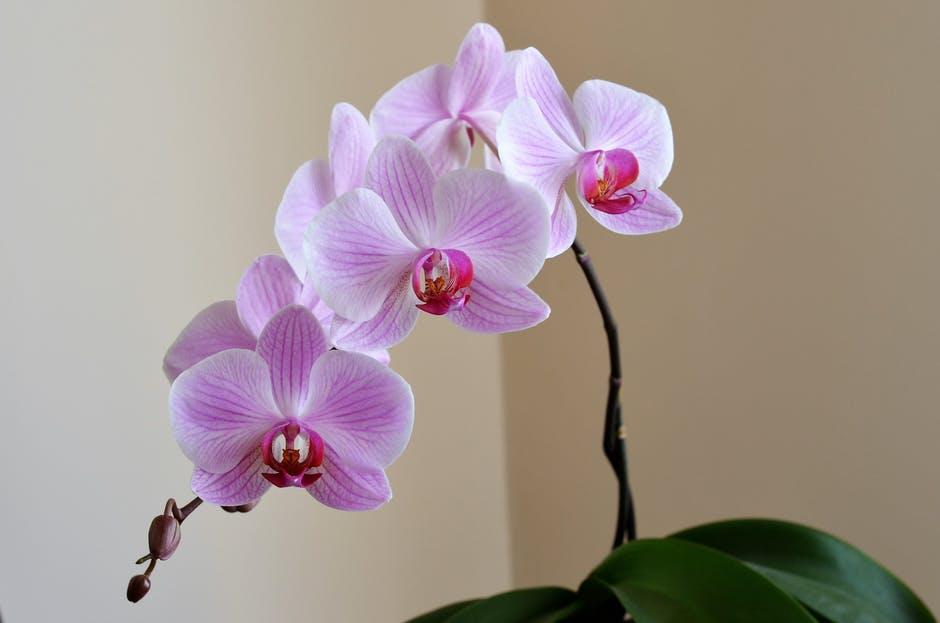 orchid.jpeg