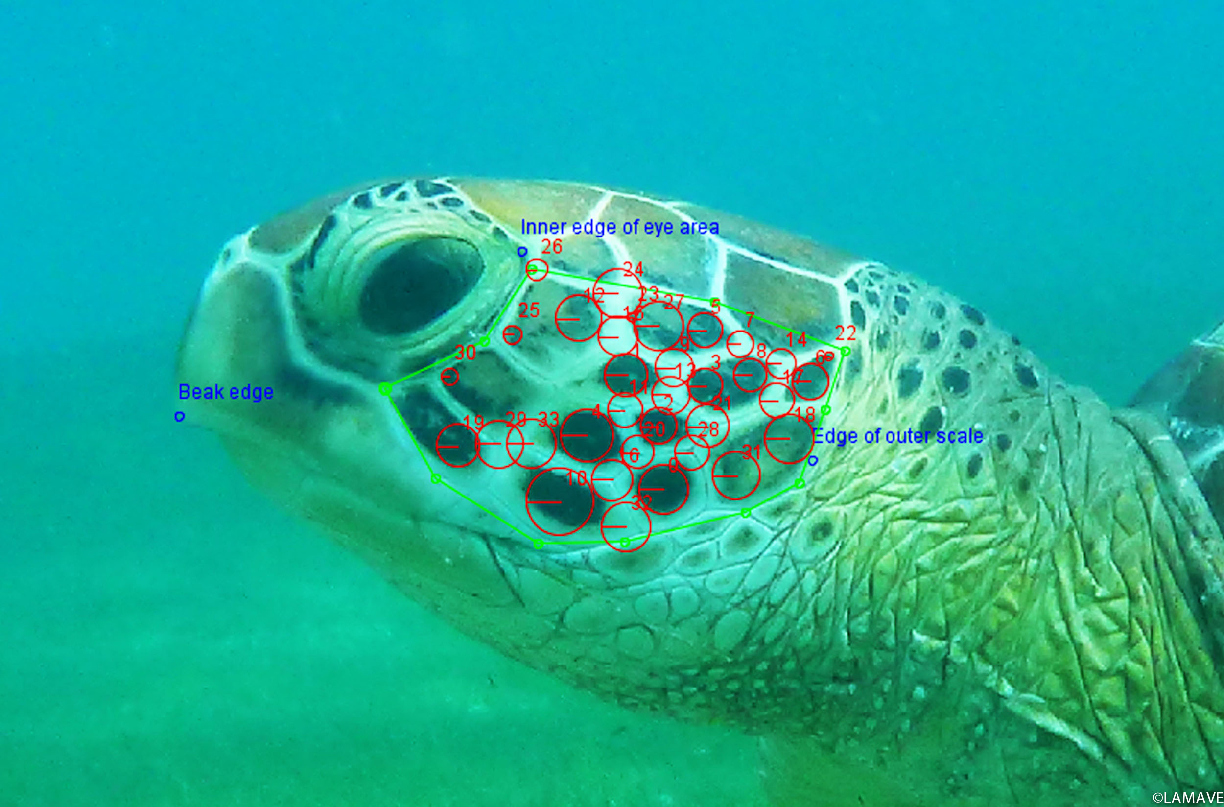 turtle-photo-ID-example-lamave-research-philippines