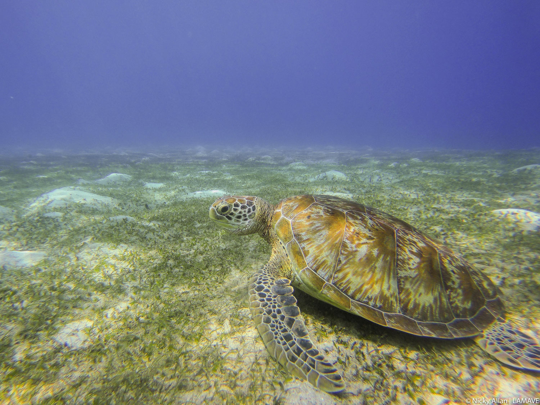 volunteer-blog-nicky-allan-lamave-turtle-philippines