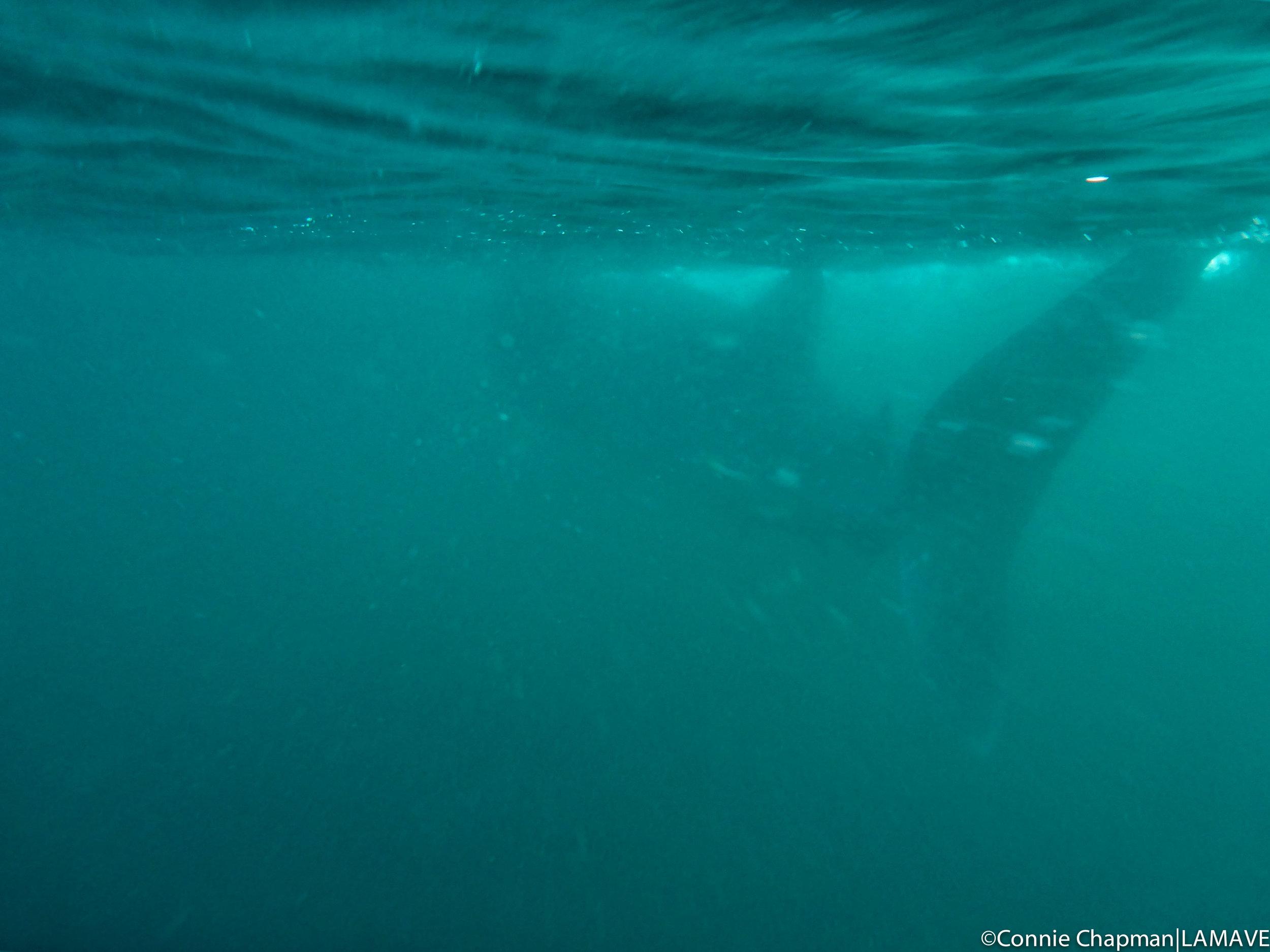 whale-shark-lamave-research-institute-philippines-volunteer