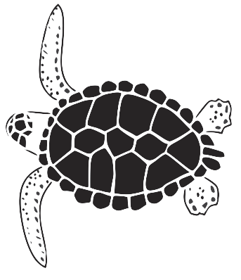 turtle graphic.png