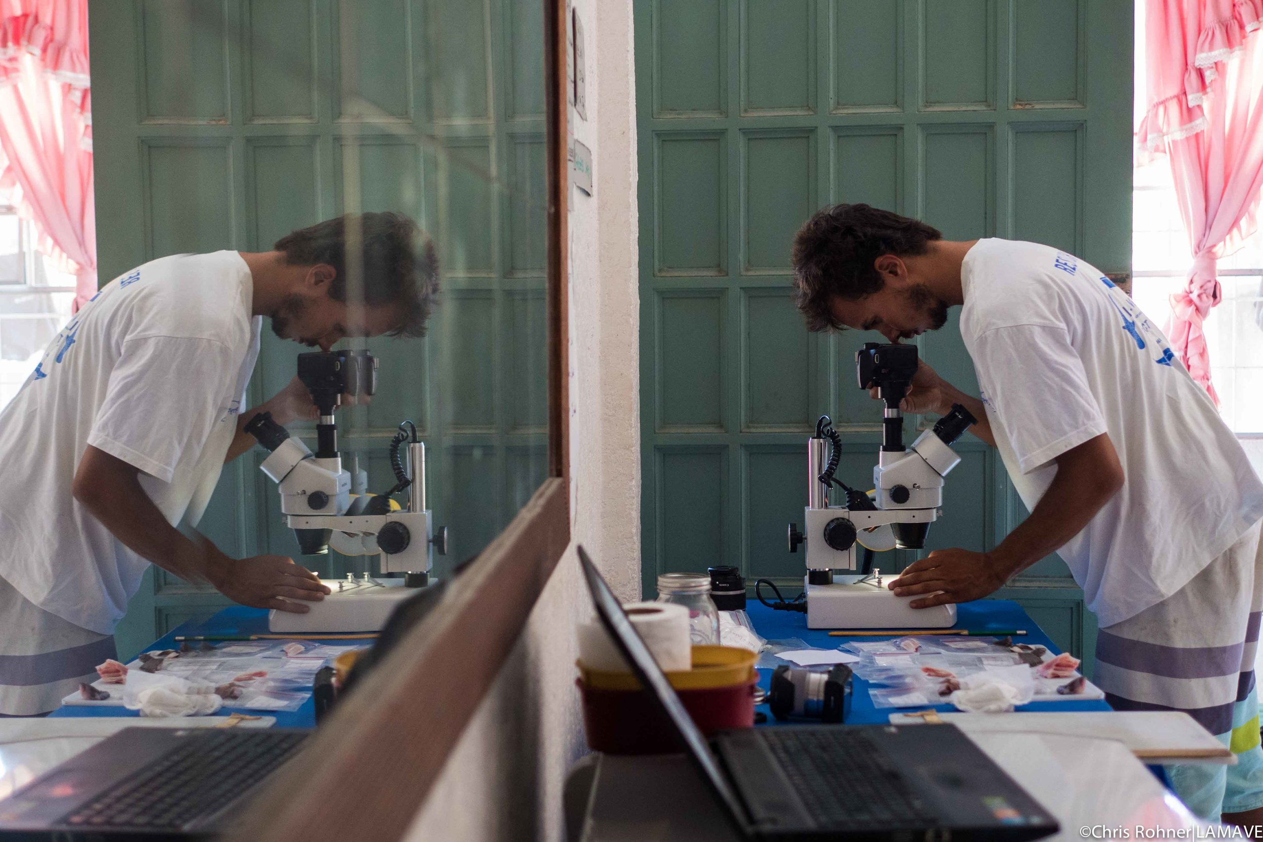 Lead Authour Joshua Rambahiniarison from Large Marine Vertebrates Research Institute Philippines at work.