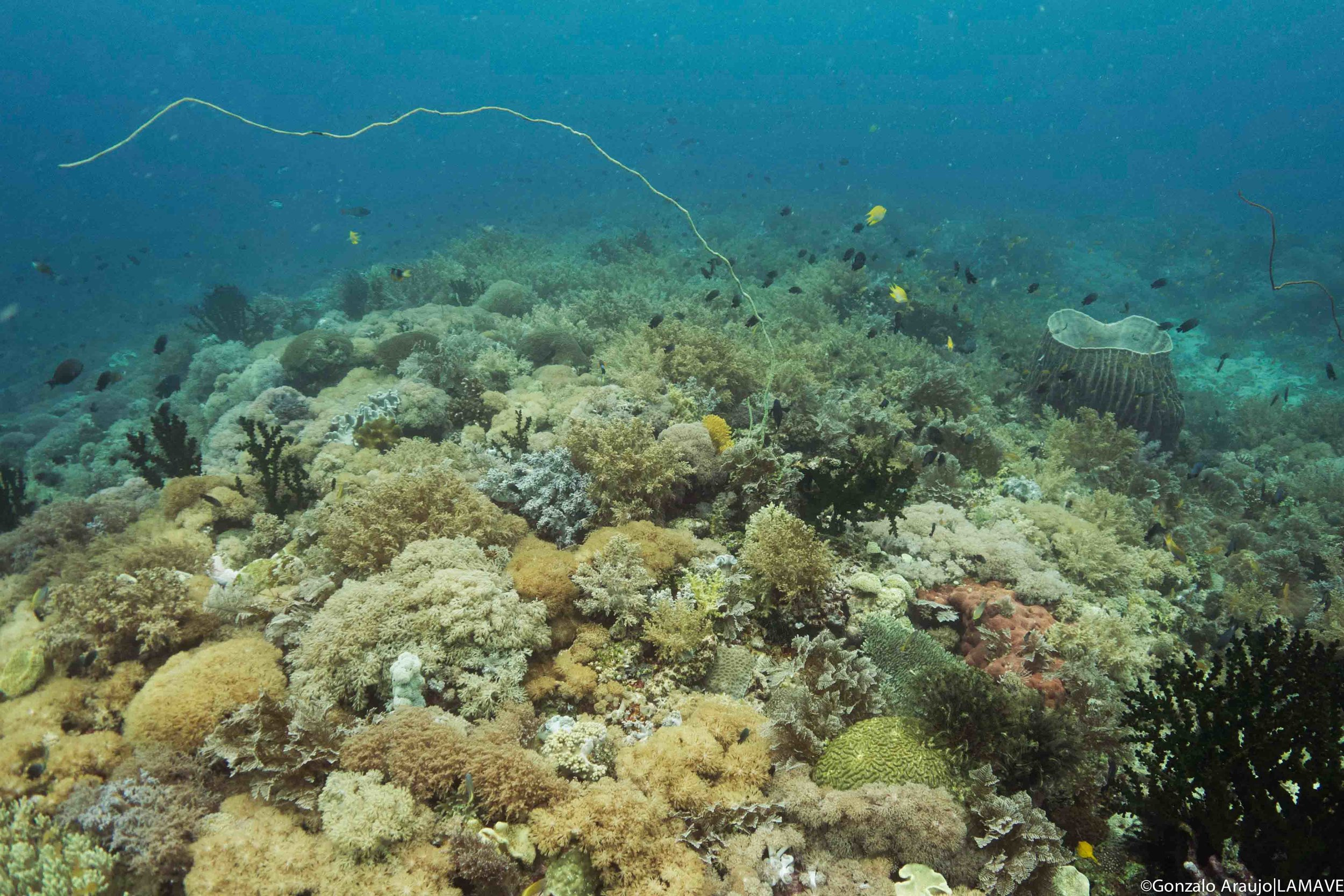 Coral Reef in Southern Leyte, Philippines