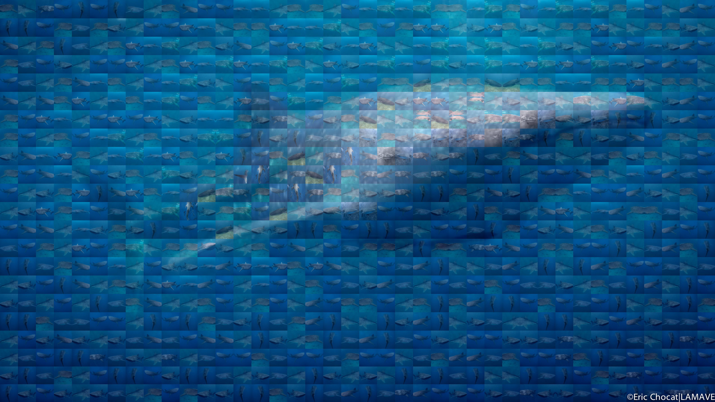 Whale shark mosaic by Eric Chocat.