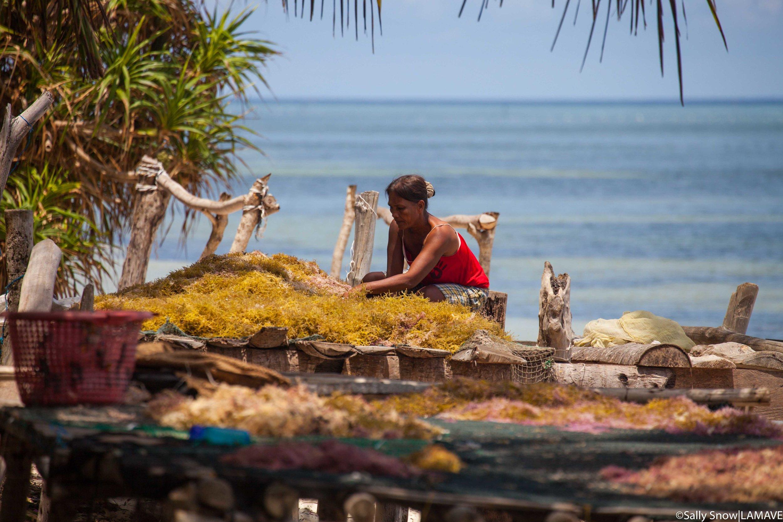 Seaweed farmer on Cawili (Credit: Sally Snow|LAMAVE).