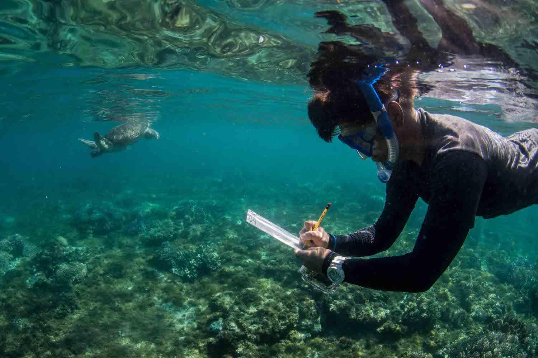 apo-island-green-turtle-research-lamave.jpg