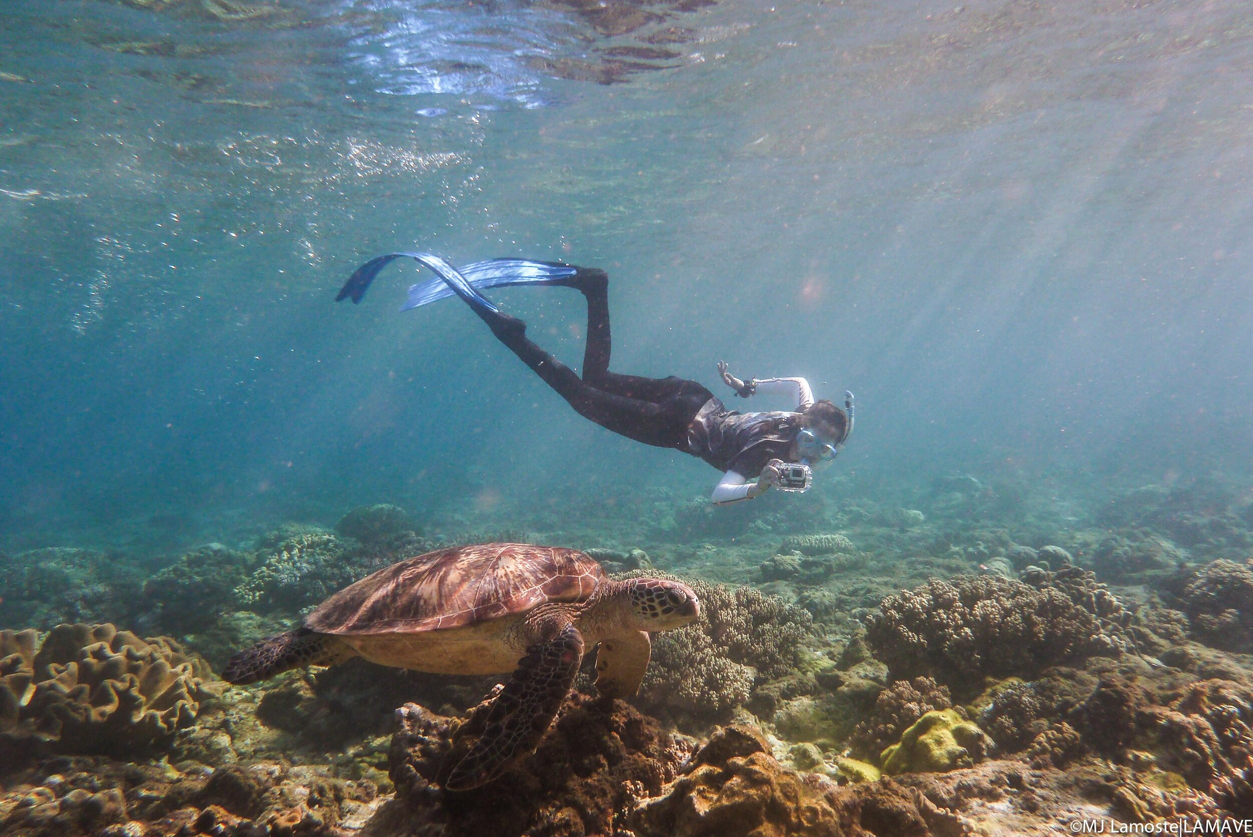 A LAMAVE volunteer takes a photo ID of a turtle around Apo Island. /Photo by MJ Lamoste
