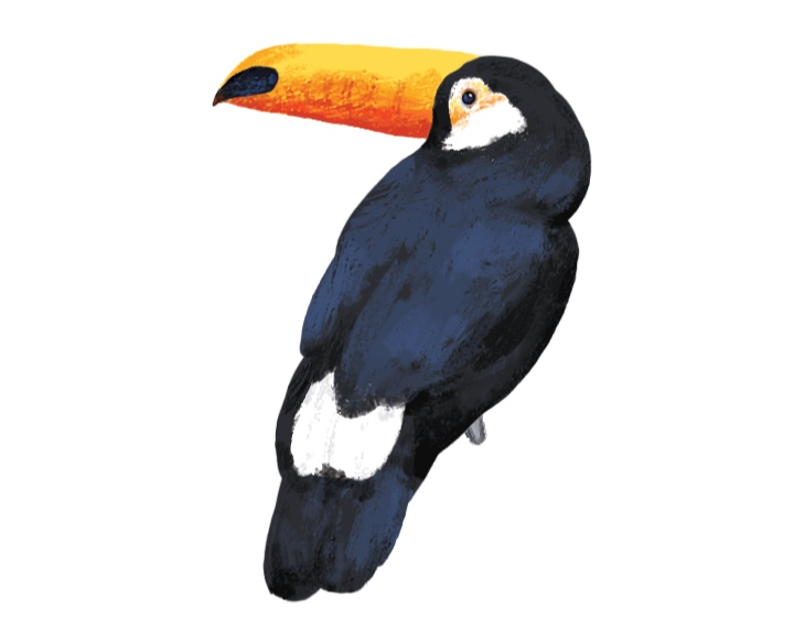 Toucan Sticker Design