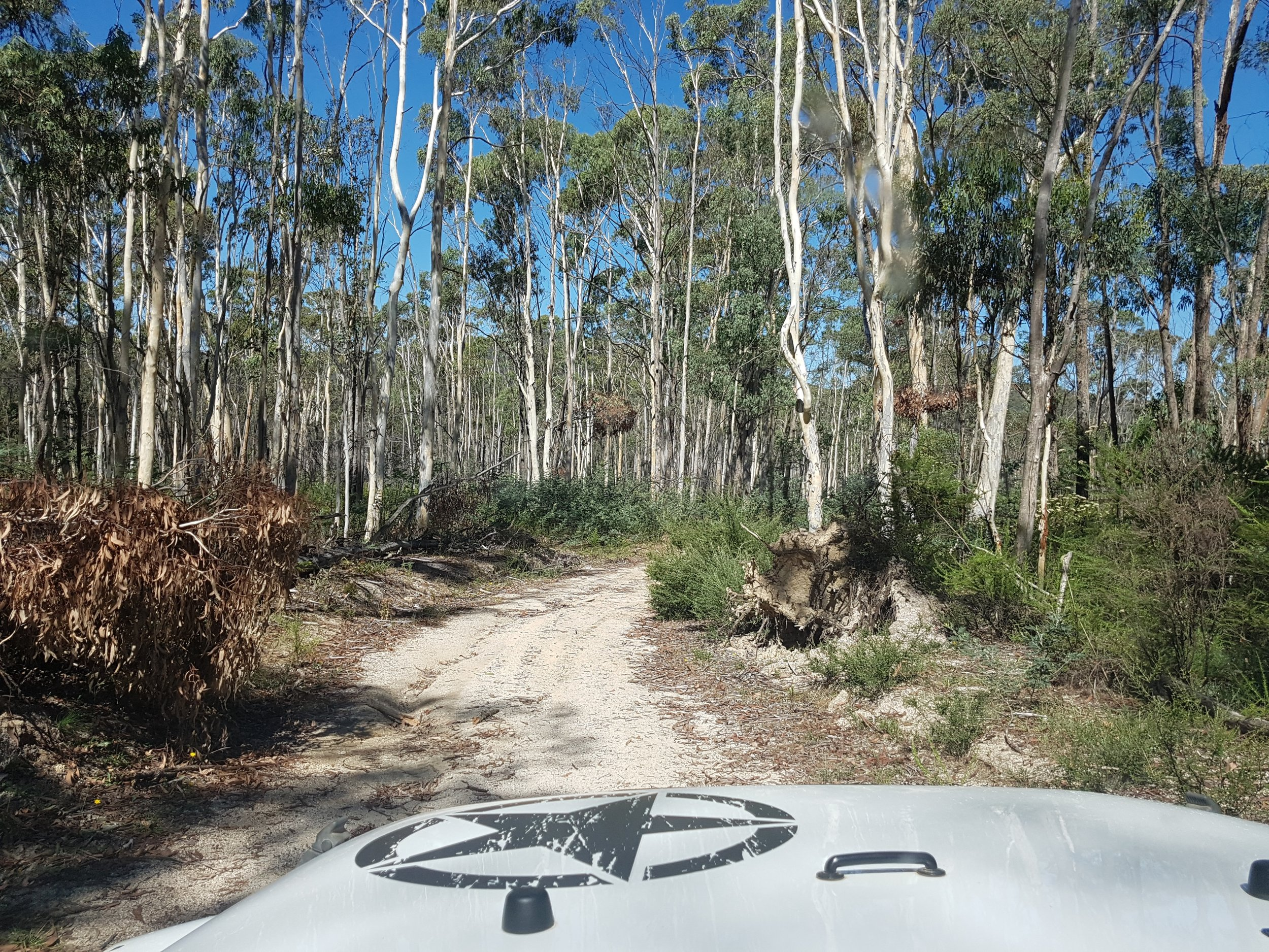 On our way to Tin Mines Campground, Woomargama National Park