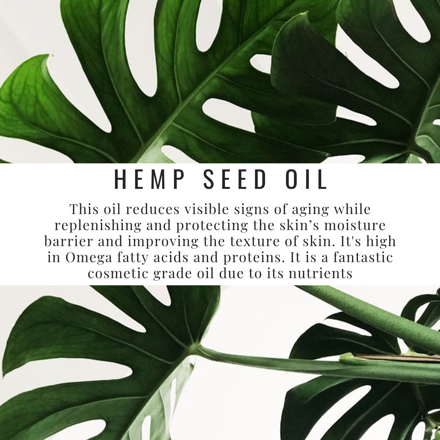 Find it in all of our CBD products, as this is the carrier oil that our CBD is extracted in.