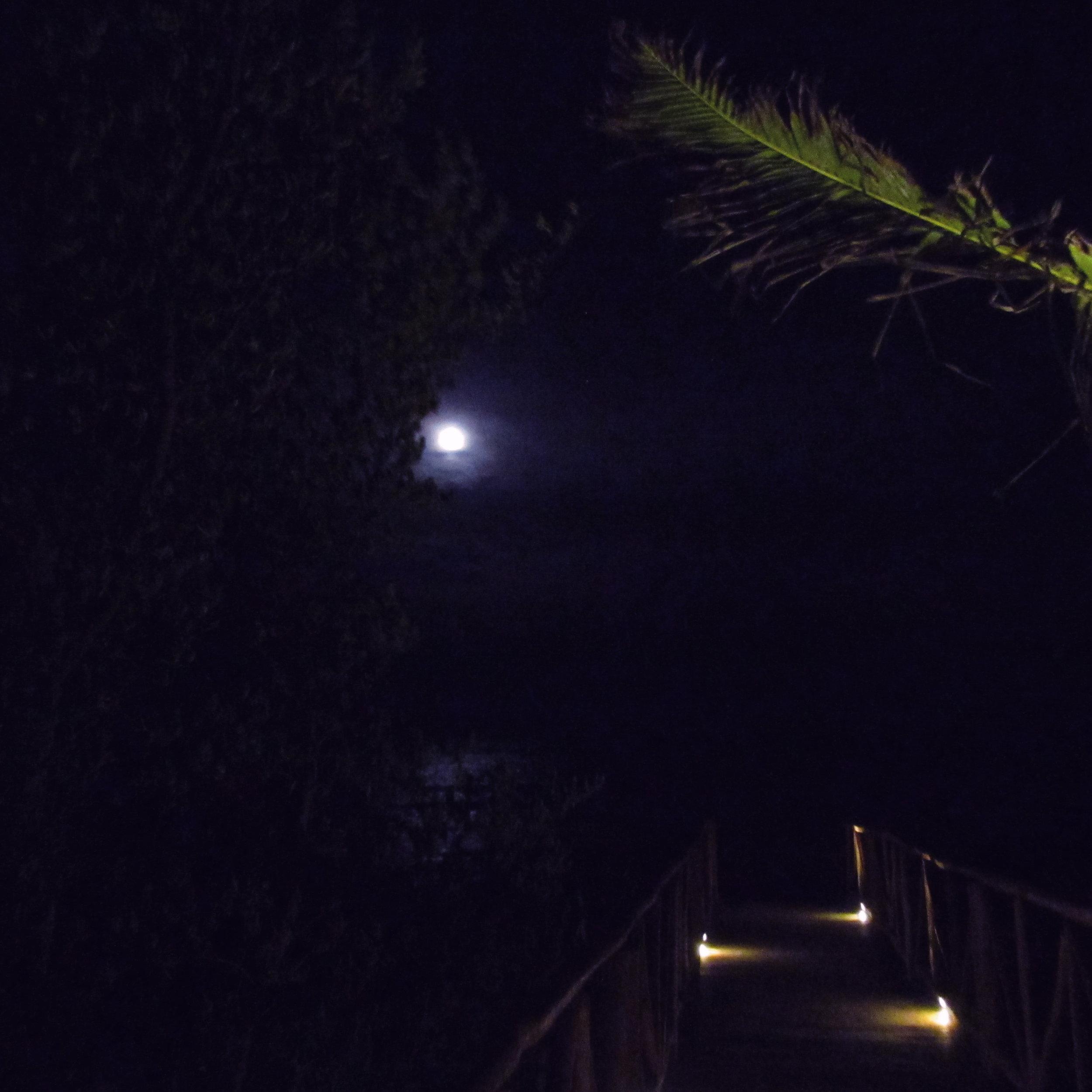 Palm TreeNight.JPG