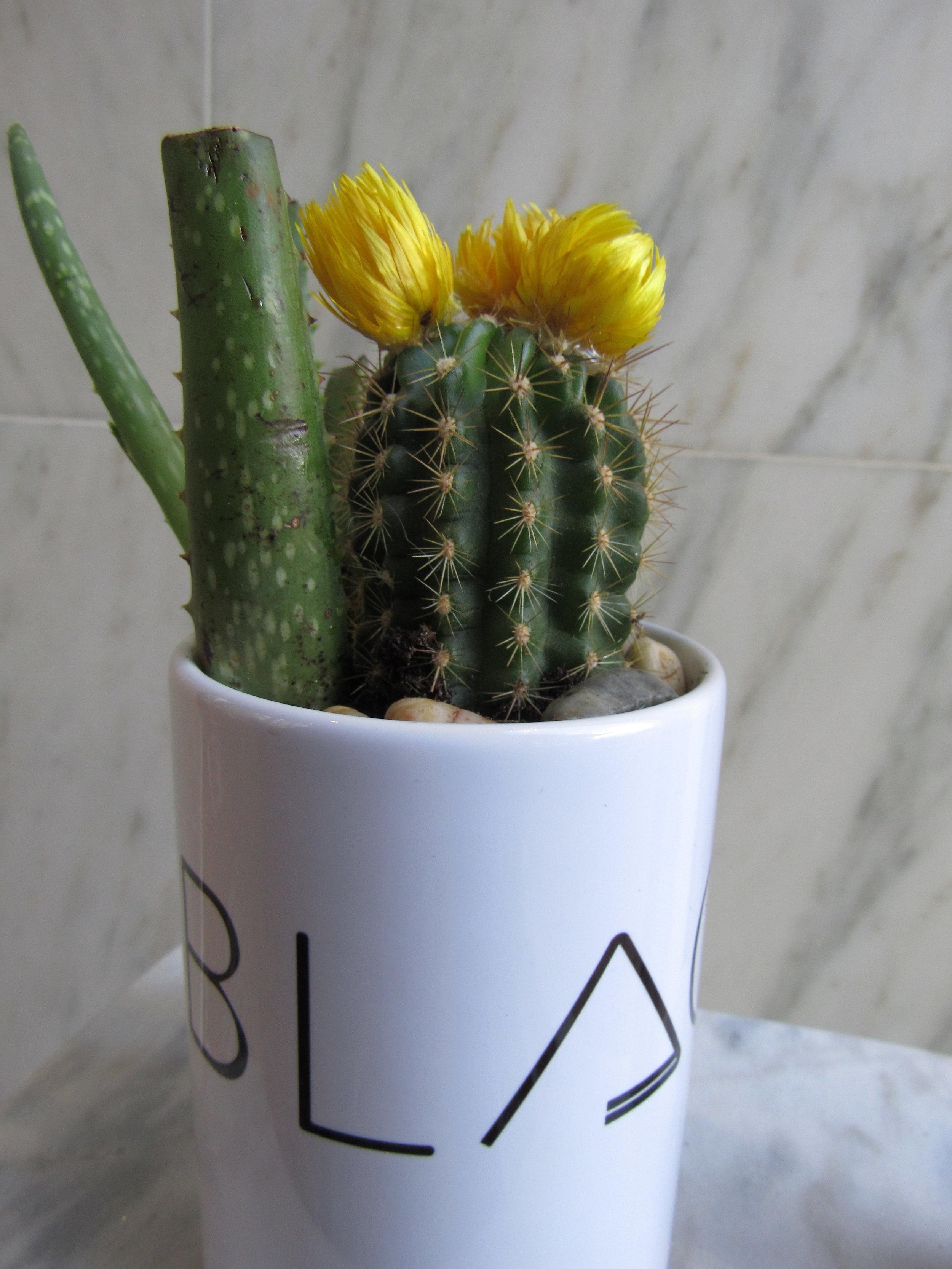 Mug Succulent.jpg
