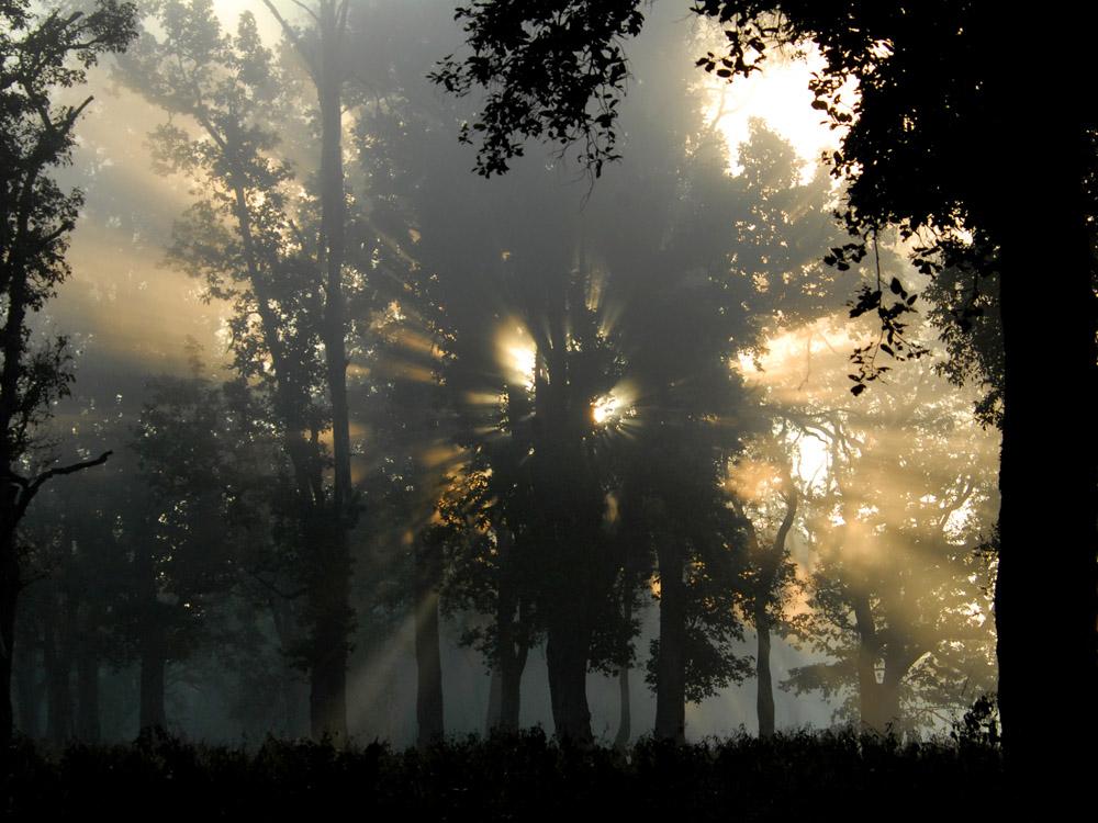 004 sun rays.jpg