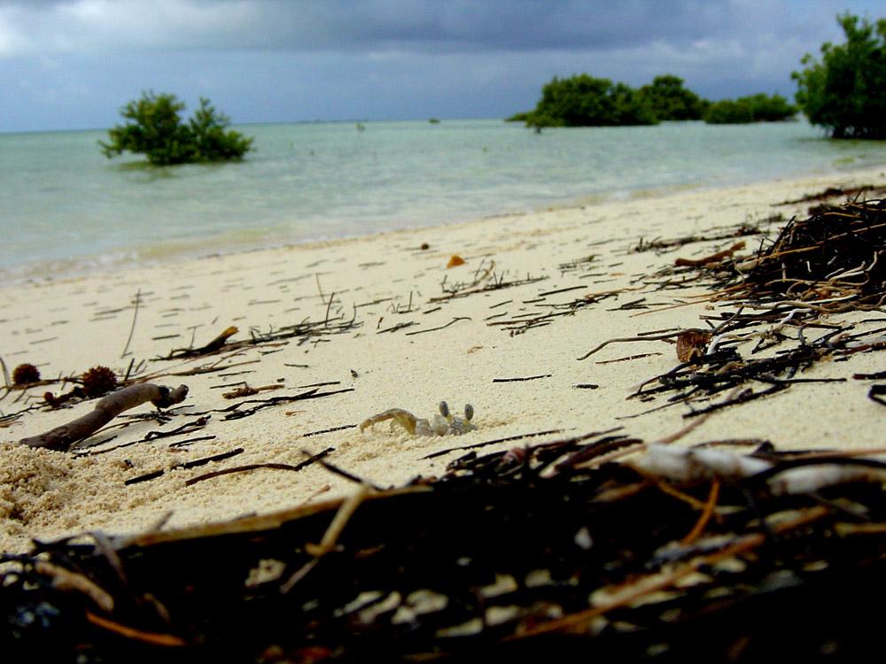 078 bimini, bahamas.jpg