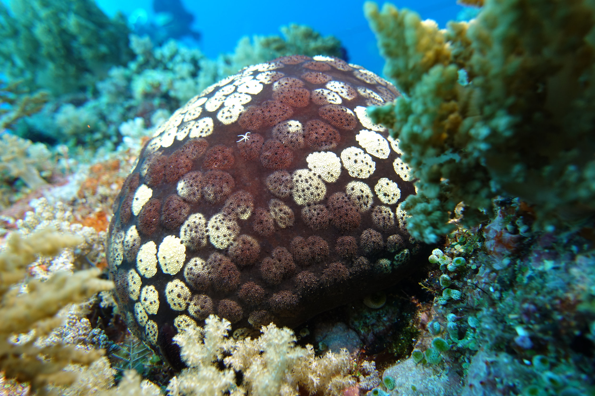 cushion star & small star 1112.jpg