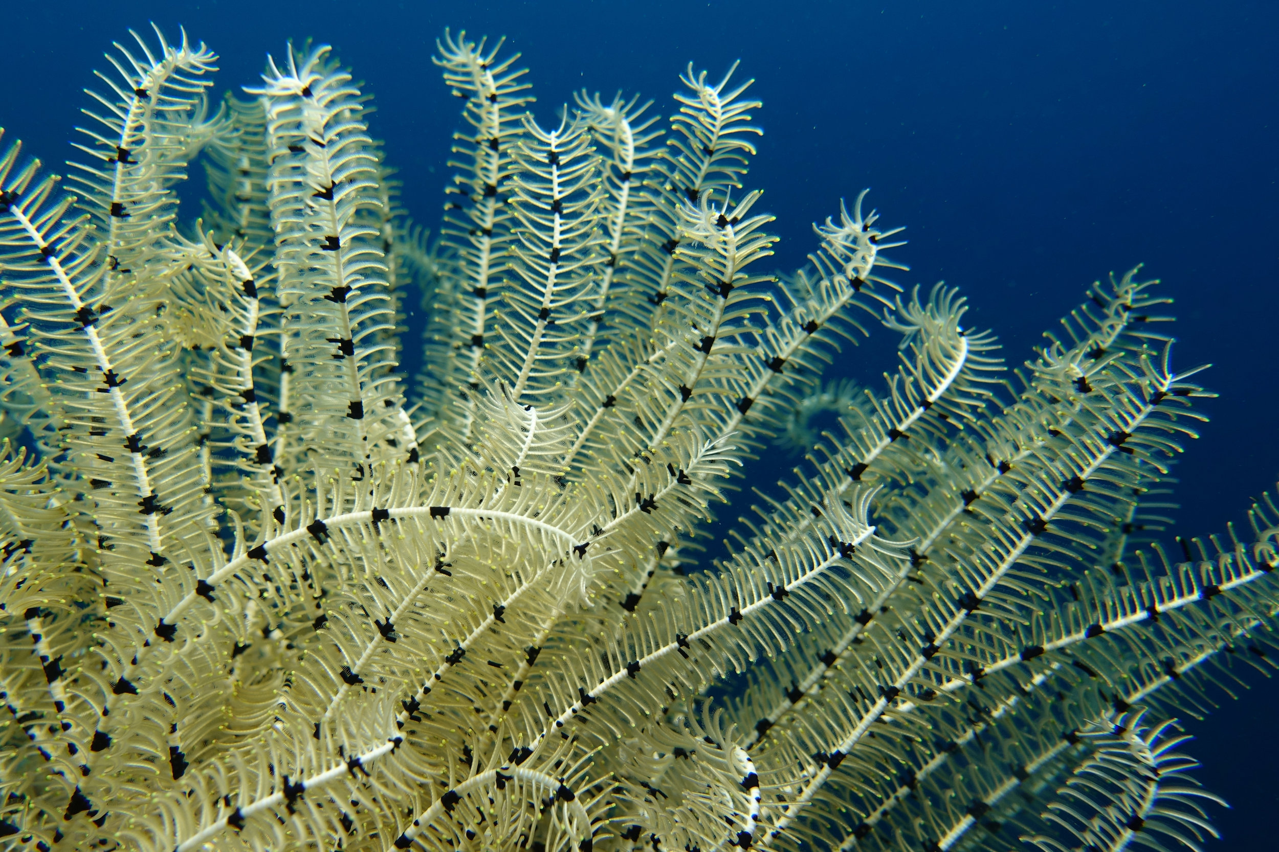 feather star 1249.jpg