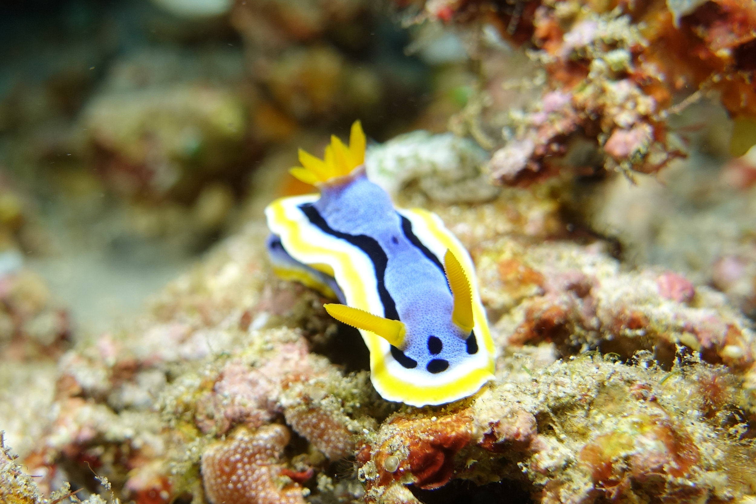 nudibranch 2118.jpg