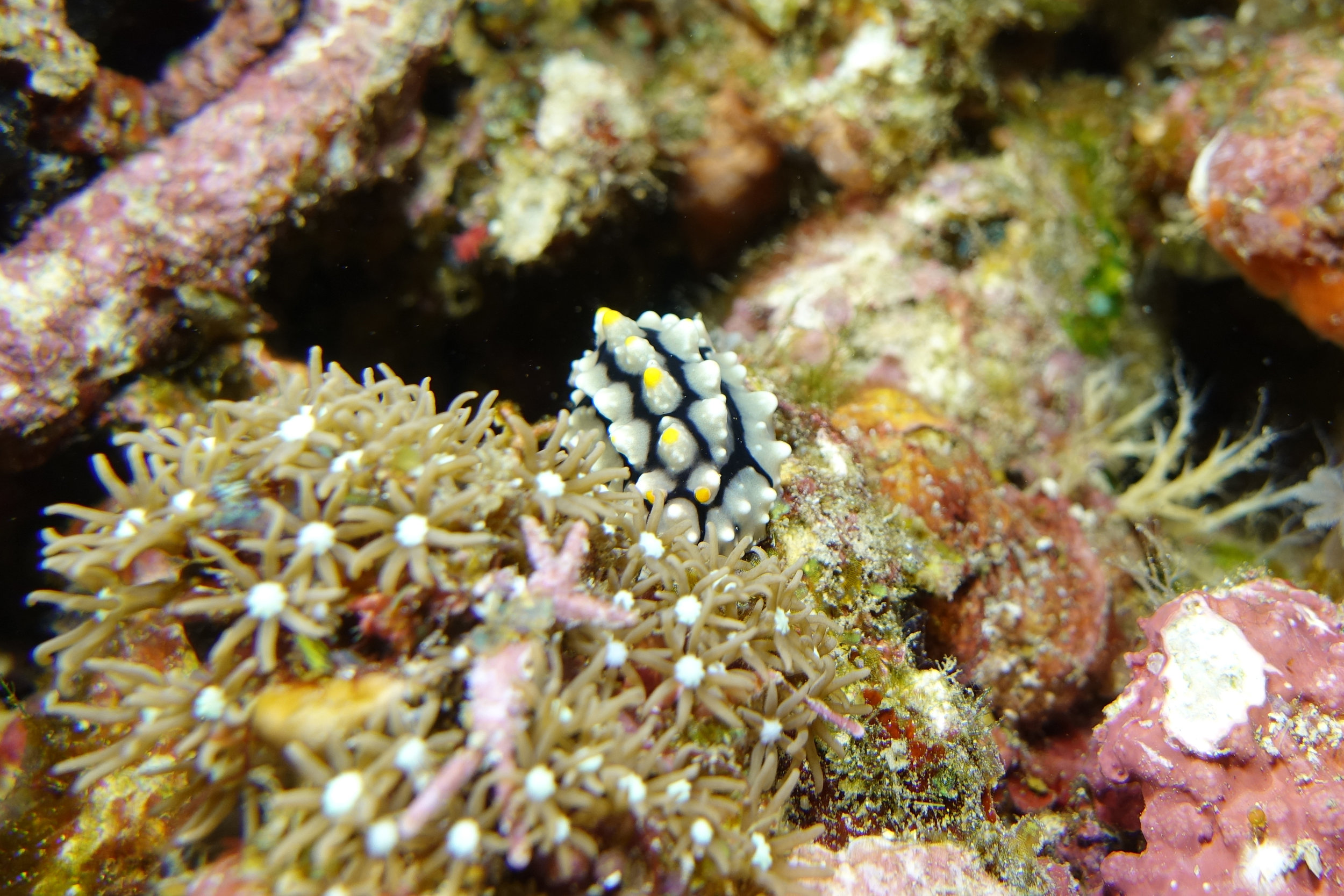 nudibranch 2127.jpg