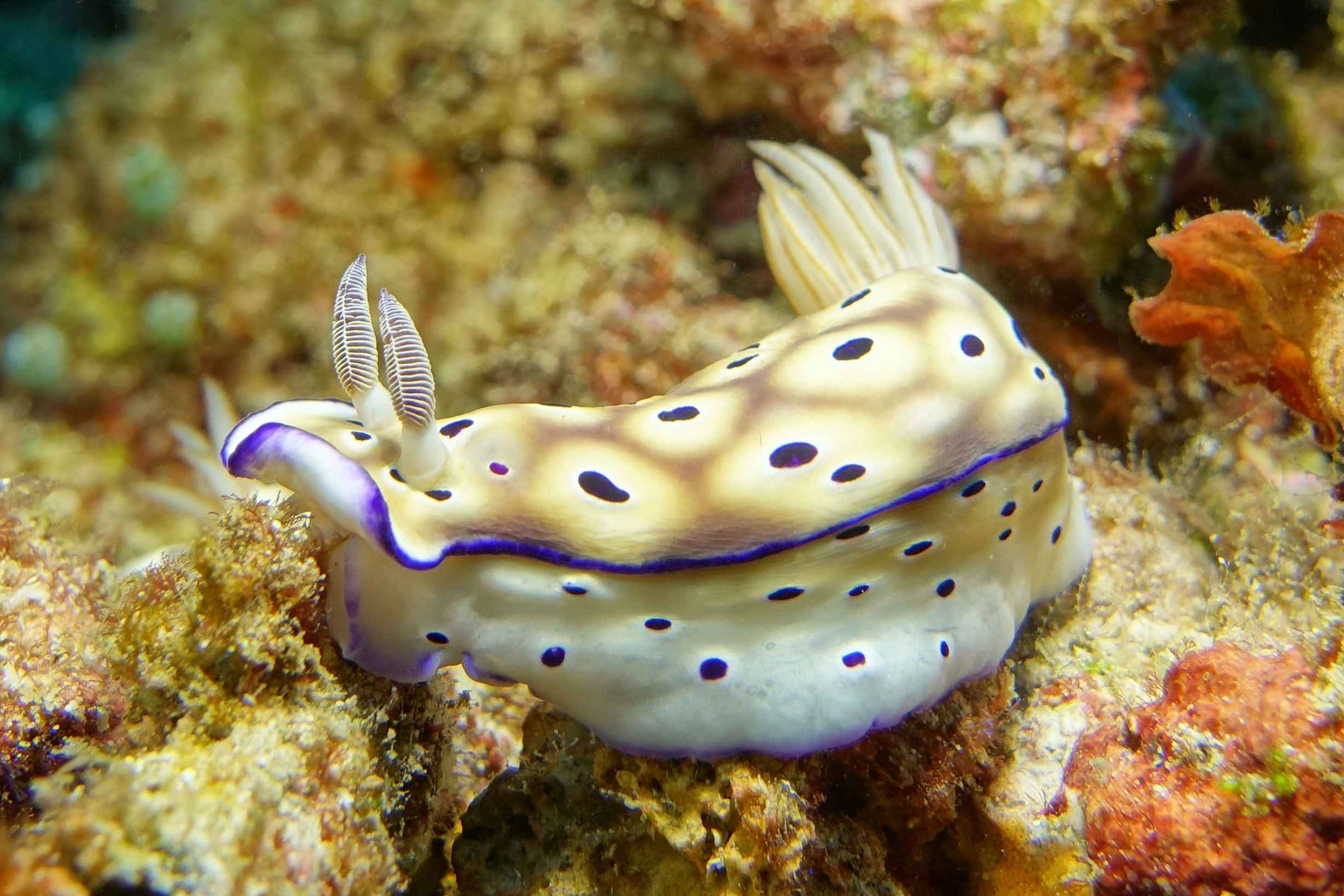 nudibranch 2297.jpg