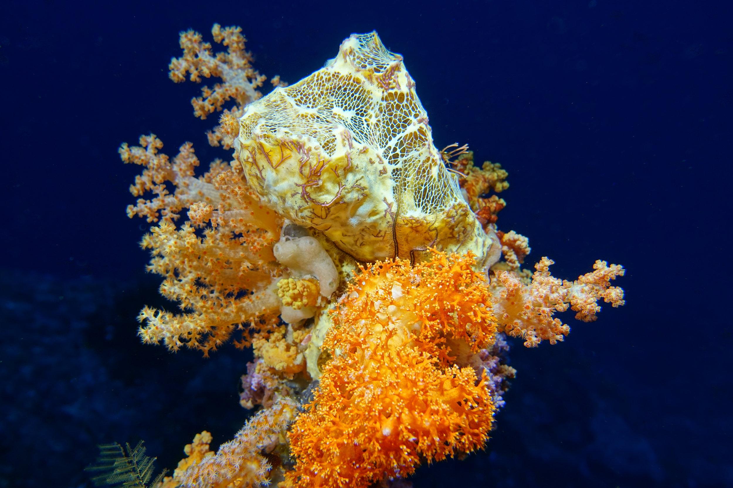 sponge & soft coral & blue 2 942.jpg