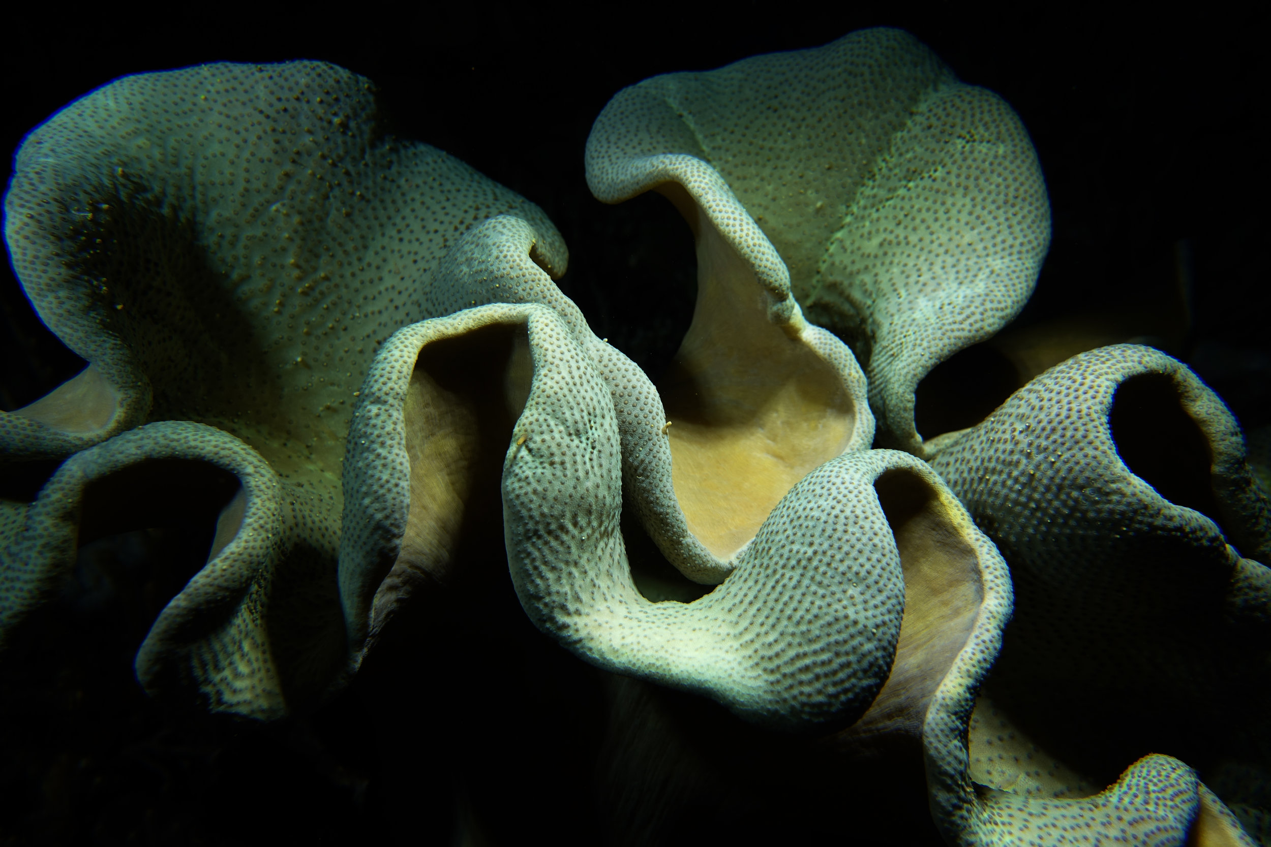 sponge at night 1085.jpg