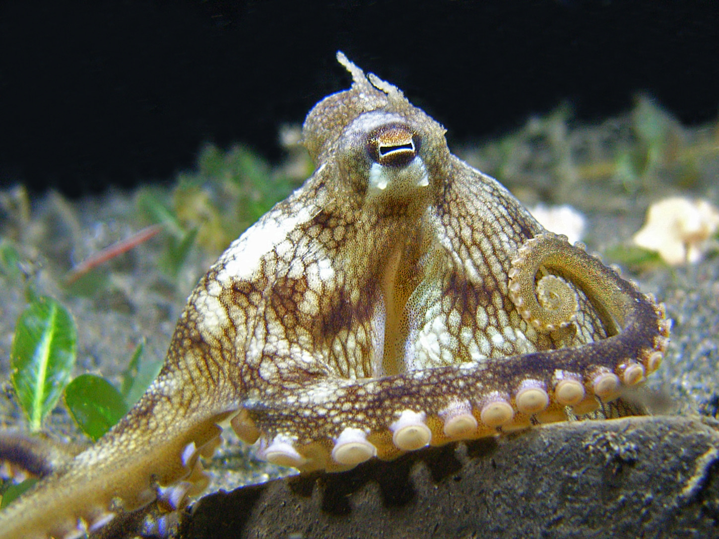 coconut octopus closeup.jpg